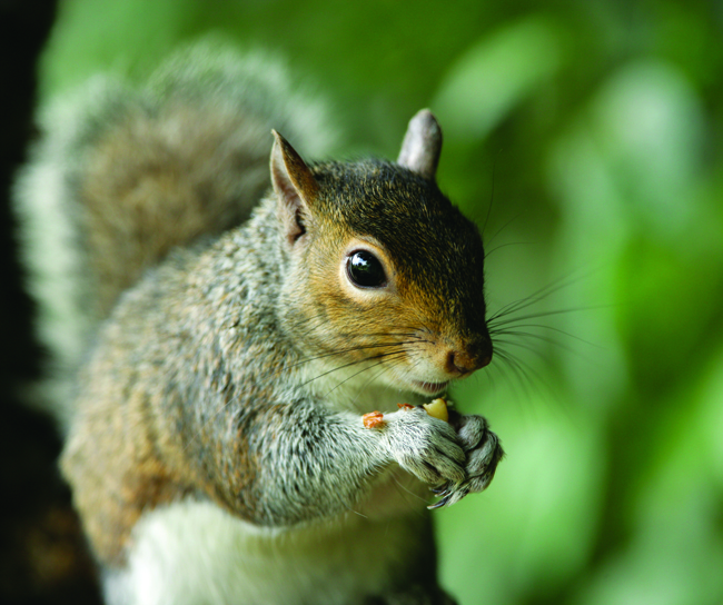 Squirrel_Photo