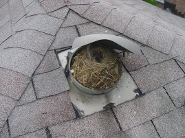 How To Remove Birds From A Vent Skedaddle Wildlife Control
