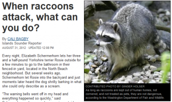 Raccoon Removal A Growing Necessity
