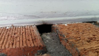 What Keeps Wildlife Coming Back - wall cavities