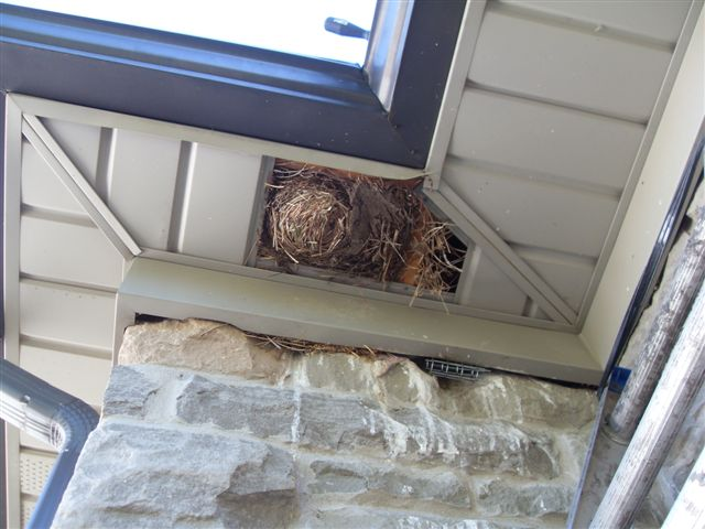 Skedaddle Ottawa How Birds Get Into Your Home