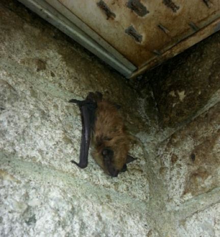 Brown staining on brick and soffits indicates heavy bat traffic