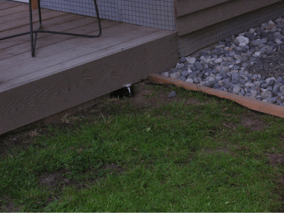 wildlife and front steps