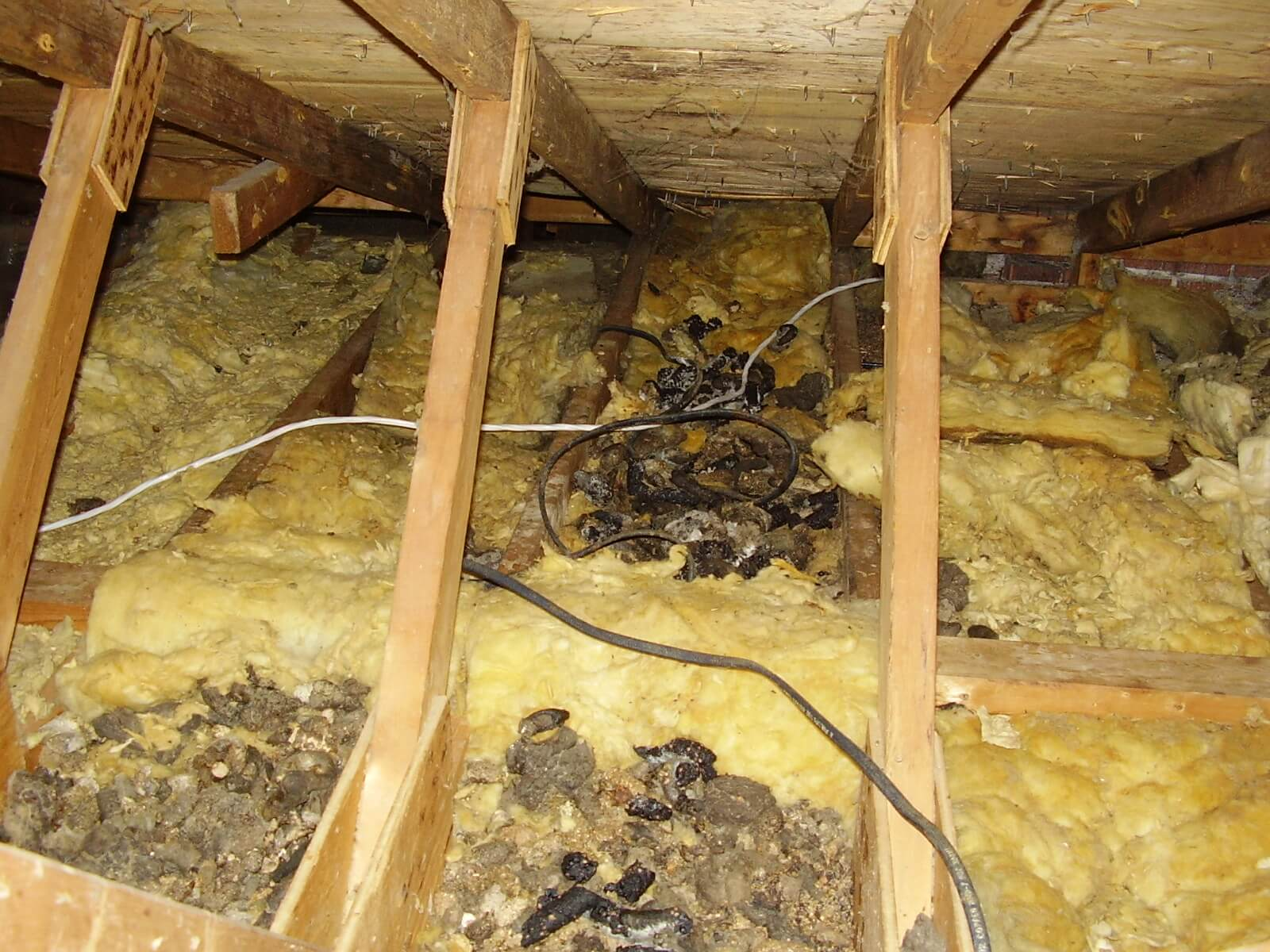Garages And Barns The Dangers Of Raccoon Urine And Feces Skedaddle