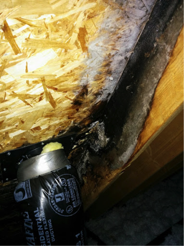 Black Mold & Roof Damage