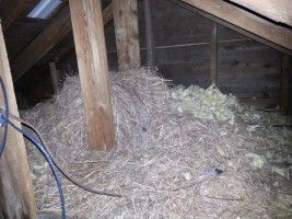 An accumulation of nesting material due to starlings nesting in a roof vent above.