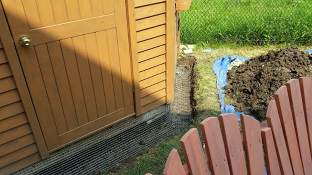 Skedaddle Humane Wildlife Control removes the foxes and then digs a trench and uses 16 gage galvanized steel to screen the area the foxes have made a den in, to prevent further access