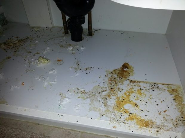 Mouse droppings and urine under a bathroom sink