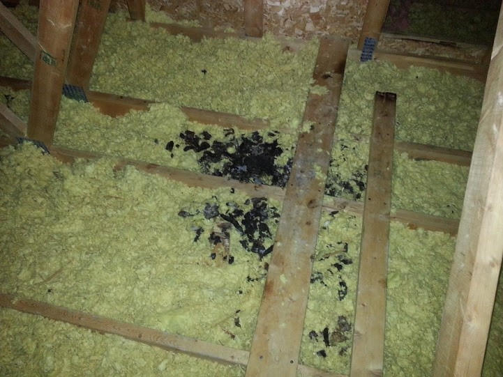 raccoon-droppings-inside-attic