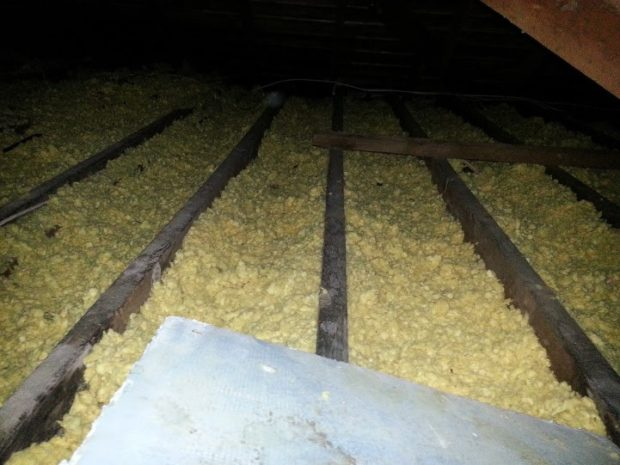 Trampled attic insulation from squirrel activity.