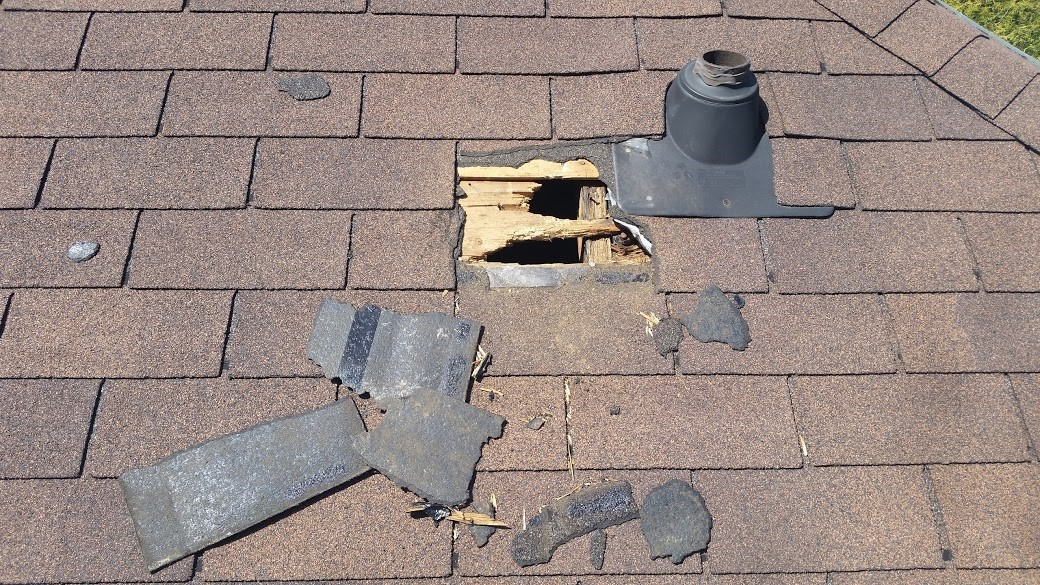 raccoon-damage-to-roof-shingles
