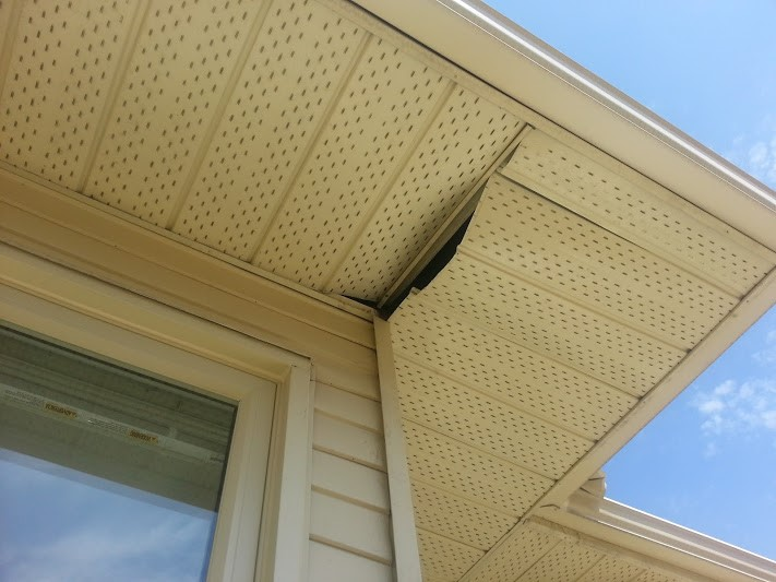 raccoon-entry-point-through-a-soffit