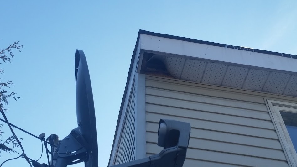 raccoon-entry-area-through-a-damage-soffit