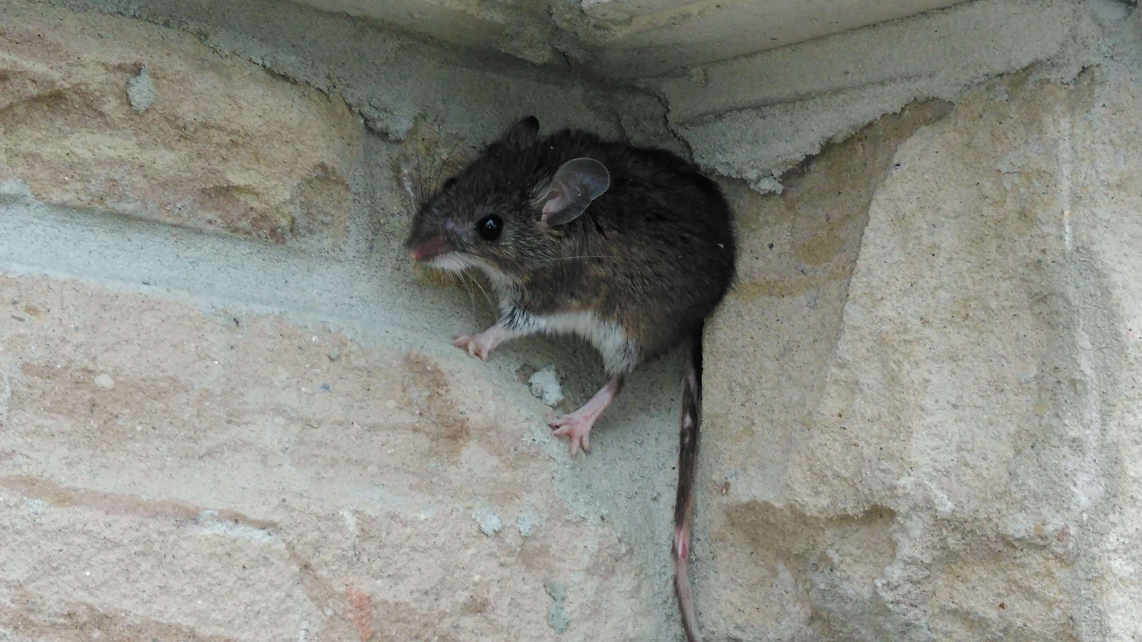 Basic Mouse Control And Stop Mice Living In Your Bbq Grill