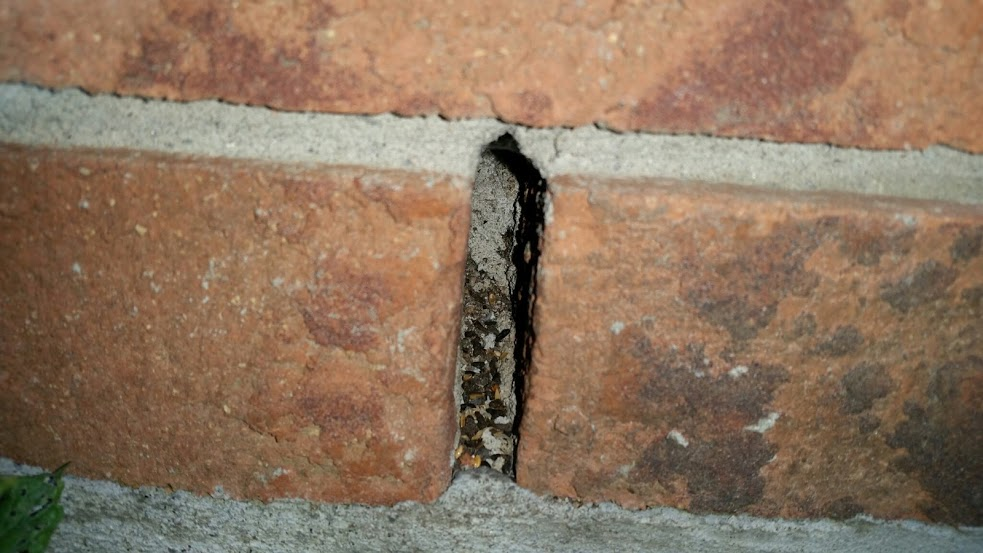 This weep vent has a significant accumulation of mouse droppings. These spaces between bricks are favourite mouse entry point into houses.