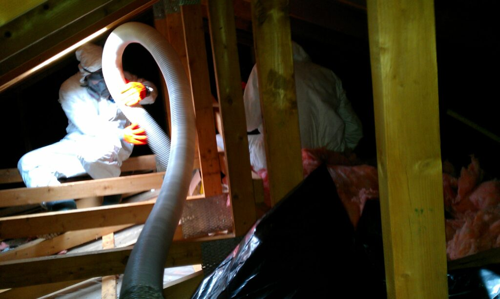 Skedaddle Humane Wildlife Control technicians removing soiled attic insulation