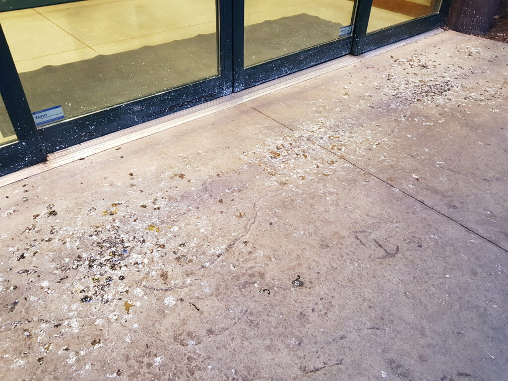 Bird droppings accumulating outside the entrance to a store are a slip and fall hazard and will end up being tracked into the store with foot traffic