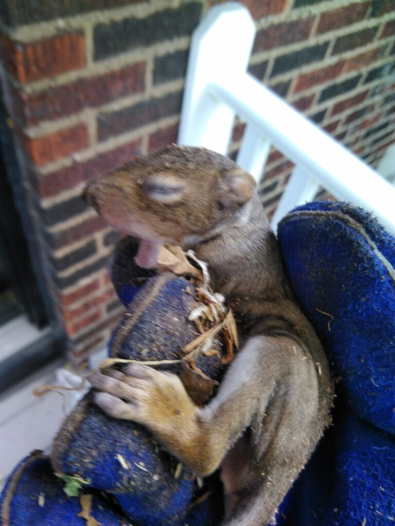 are squirrels active at night