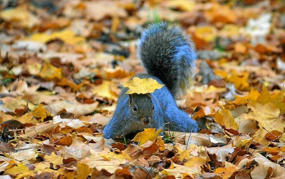 Wild Grey Squirrel Animal