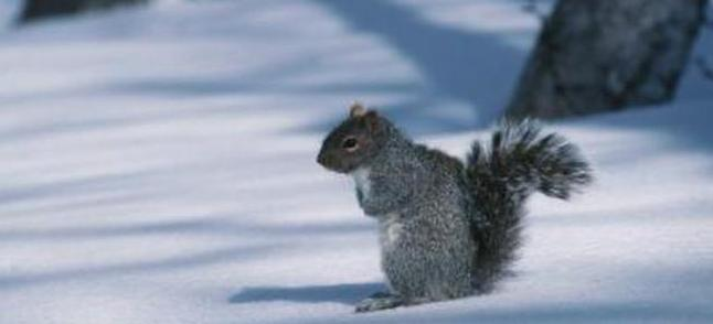Squirrels are another animal that remain active through winter.