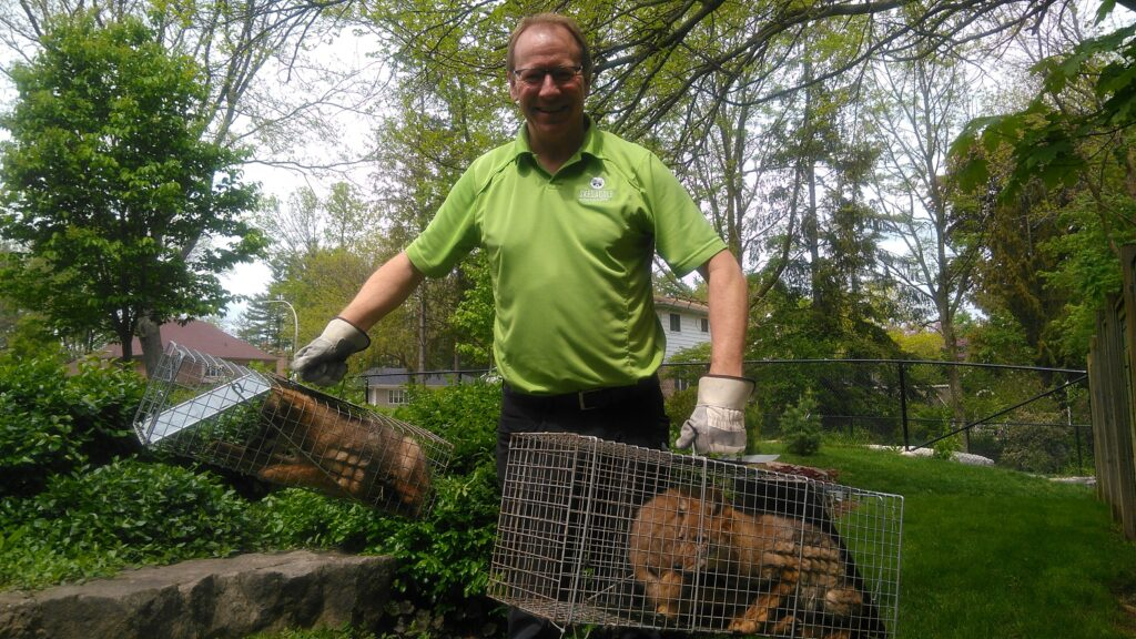 Milwaukee Animal Control Keep Coyotes Out Of Your Yard