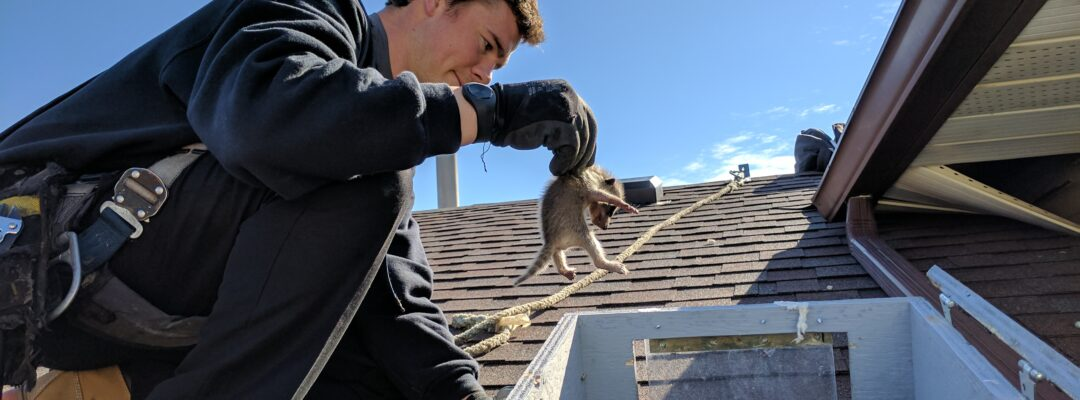 Wildlife Technician Rescuing Wildlife Baby