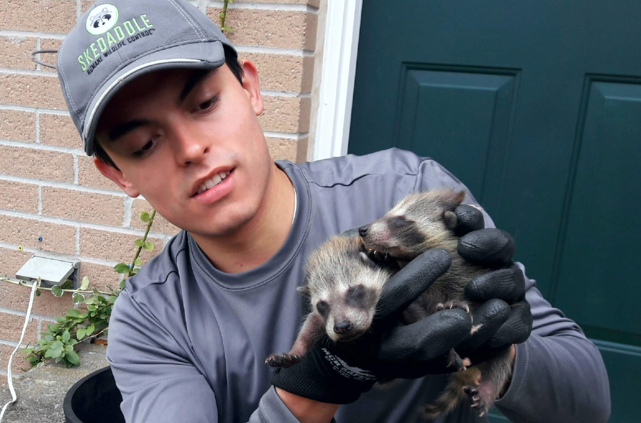 Skedaddle Mississauga Technician Holding Raccoon Babies