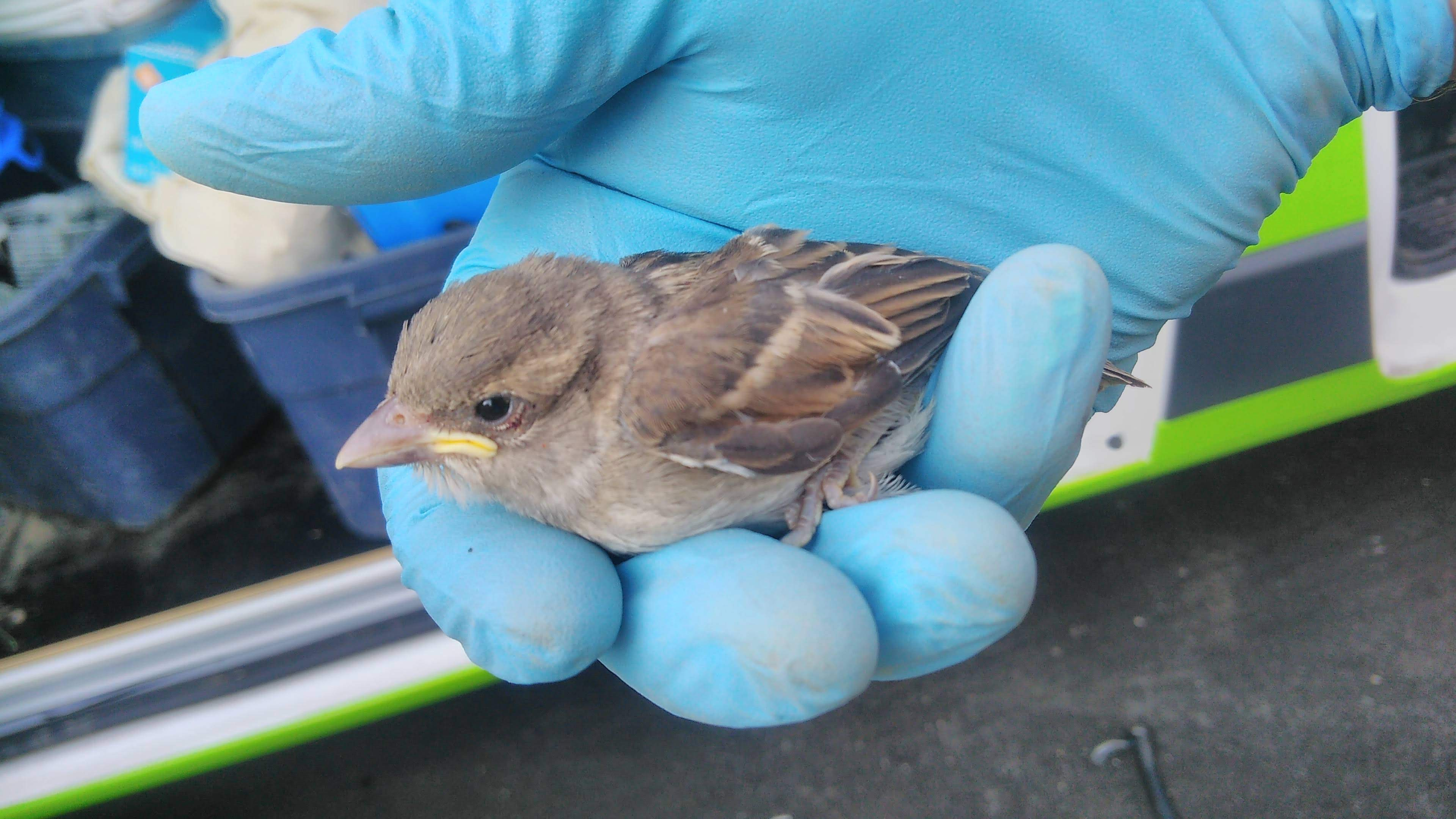 worker save a sparrow