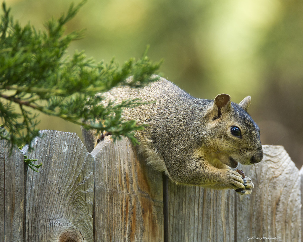 Squirrel - Featured Image