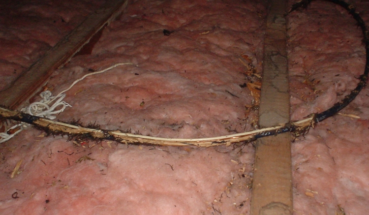 Chewed Wire Above Insulation
