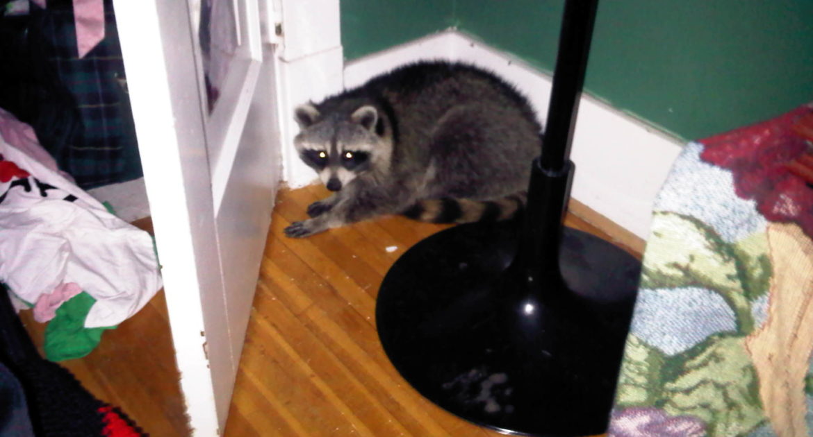 Wildlife Removal Houston