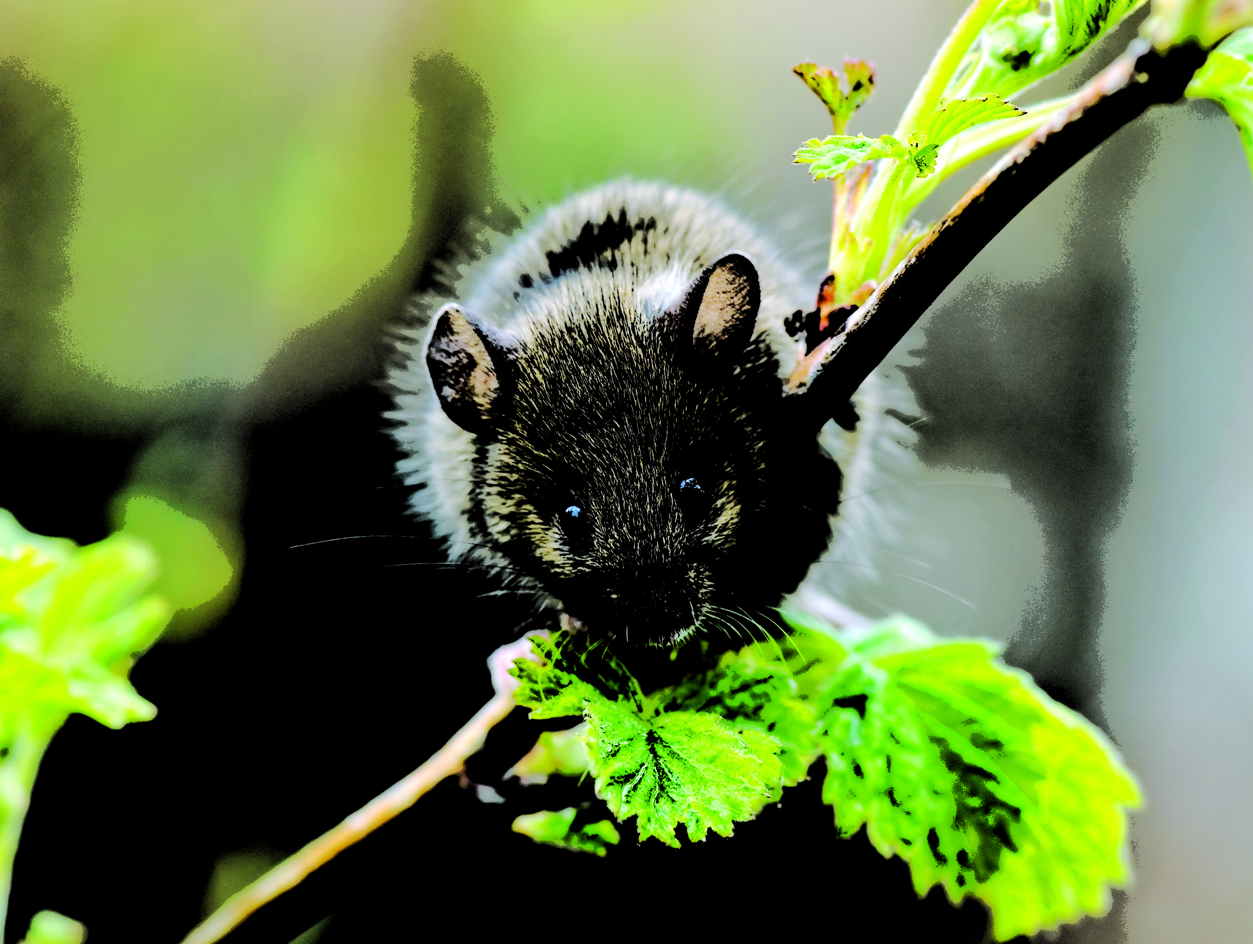 Mice Removal Pickering