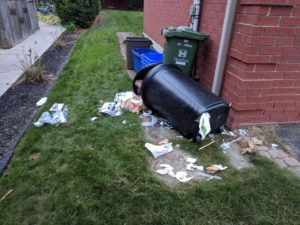 Wildlife Removal Milwaukee