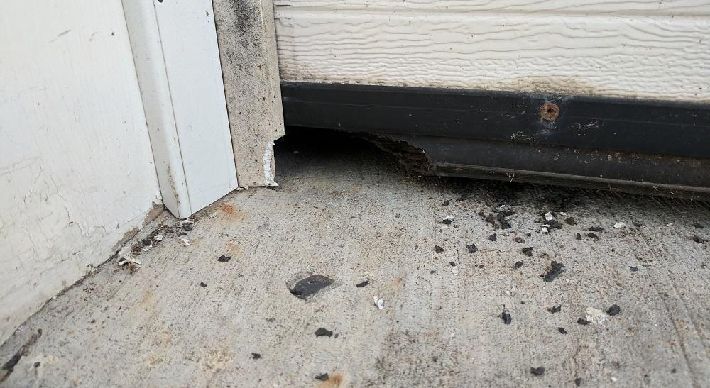 Mice Removal Montreal