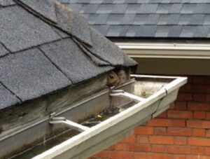 The Unseen Entry Points of Squirrels - Roof Edge