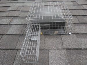 The Unseen Entry Points of Squirrels - Roof Vent