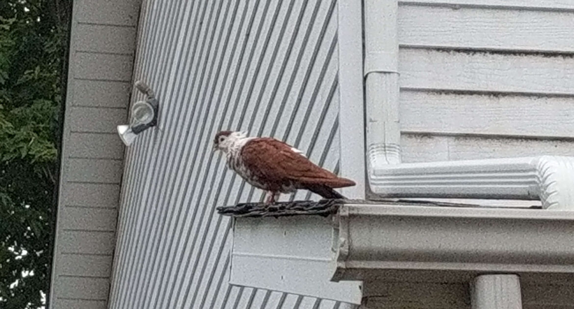 Bird Removal Montreal
