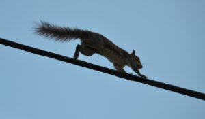 Kitchener Wildlife Removal Do Squirrels Go Out At Night (Kitchener) - 2