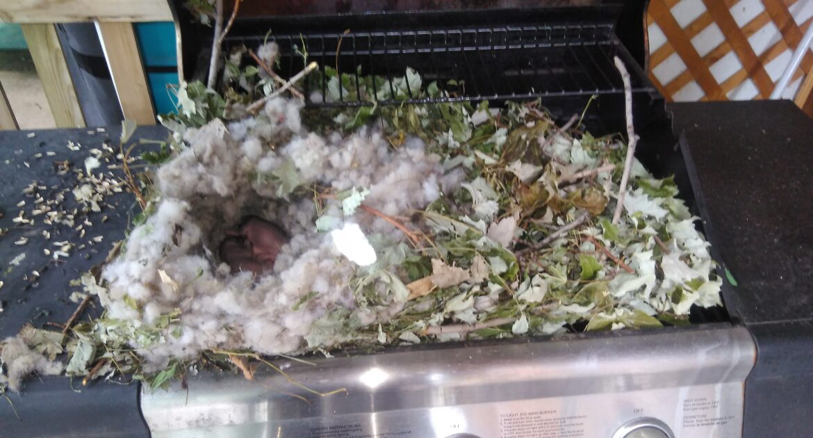 BBQ grill becomes a wildlife shelter